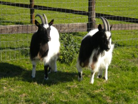 Photo of Harriett and Henrietta