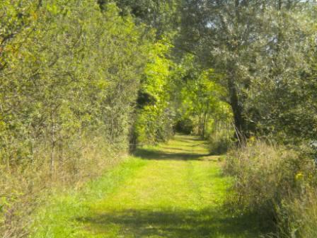 Photo of lakeside walk