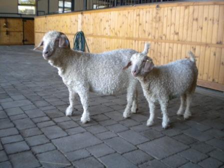 Photo of Mathilda and Mabel